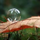 bubble on a leaf by Erin Mason