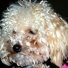 Wet Nose means I'm OK..... So, buzz O F F !!!!!! by Larry Llewellyn