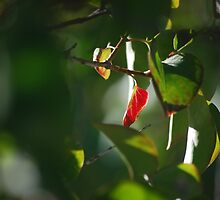 Last Glimpse of Autumn by Jenni Greene
