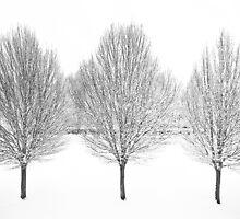 Three-in-a-row by George Parapadakis (monocotylidono)