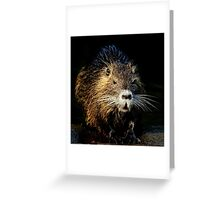 coy coypu Greeting Card