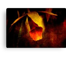 Full of Grace Canvas Print