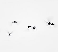 Nine crows lift off by Pekka Nikrus