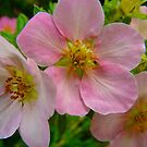 Apple Blossom Delight by MaeBelle