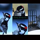 Downy Woodpecker Collage by KatsEye