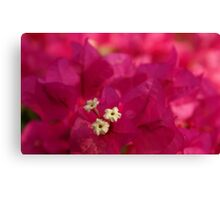 Prominent Pink Canvas Print