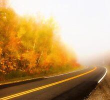 Foggy Day by Sarah G.