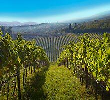 View of Hunter Valley vineyards, NSW, Australia by Atanas Bozhikov NASKO