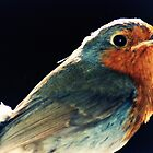 Robins Eye View by loz788