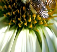 Bumble Bee on Echinacea Sticker