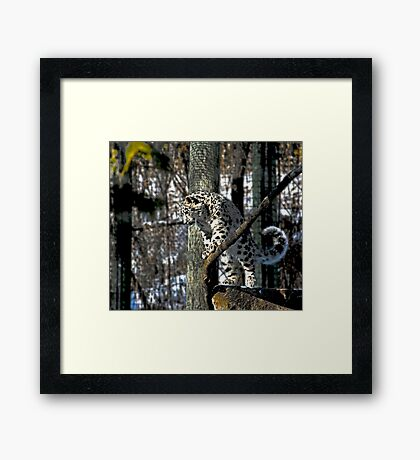 What's up.........? Framed Print