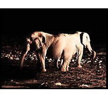 Siamese Elephant bulls Photographic Print