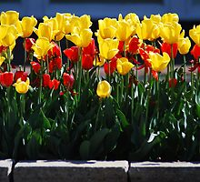 Spring Flowers on the Plaza, Kansas City, Mo by Chelsea Herzberg