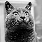 """Stereo Cat - """"Im all eyes and ears, Sir!"""" by Explosive"""