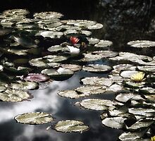 Giverny by Michael Carter