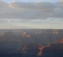 Flight  of the Condor - Grand Canyon by Barbara Burkhardt
