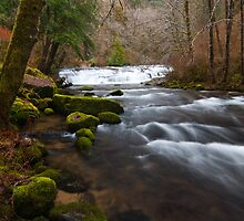 Sweet Creek, Oregon by Albert Dickson