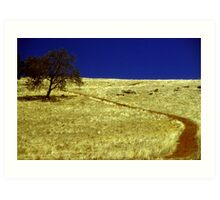 Red Dirt Path Art Print