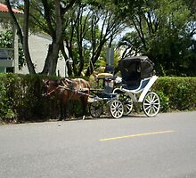 Horsedrawn Carriage by Silvia Mele