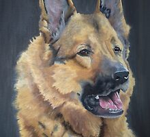 German Shepherd by Ian Morton