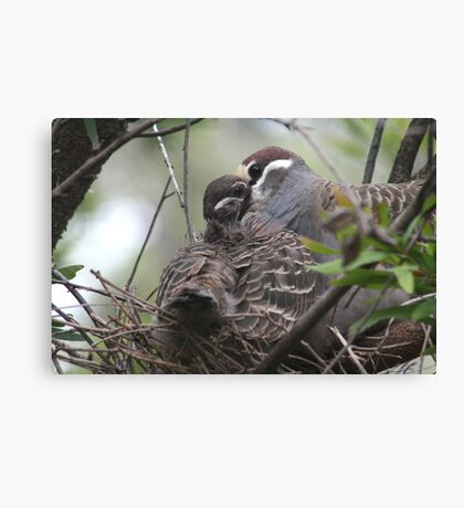 """Feeding time for """"Summer"""" Canvas Print"""