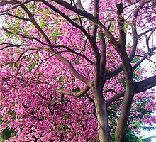 Elegant Tree by Esperanza Gallego