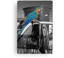 Perched Macaw Canvas Print