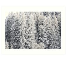 Winter Trees - Boedele, Austria Art Print