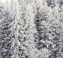 Winter Trees - Boedele, Austria by Chelsea Herzberg