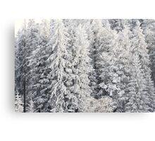 Winter Trees - Boedele, Austria Metal Print