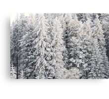 Winter Trees - Boedele, Austria Canvas Print