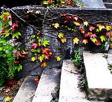 Fall Vines - Zurich, Switzerland by Chelsea Herzberg