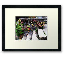 Fall Vines - Zurich, Switzerland Framed Print