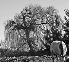 Willow Horse by katebarclay