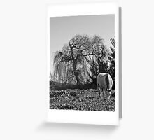 Willow Horse Greeting Card