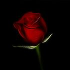 Valentine Rose by Sandy Keeton