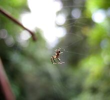 Delicate little web maker by Artbutterfly