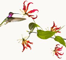 Colibri on tropical lily flower by Digital Editor .