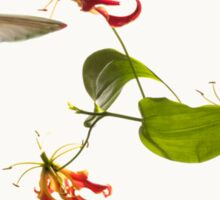 Colibri on tropical lily flower Sticker