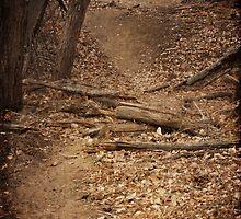 A Path Often Trod by WiredMarys