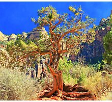 Standing strong Photographic Print