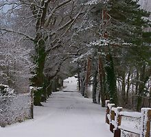 Snow covered by ColinBoylett