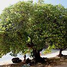 Beach Tree by kevin smith  skystudiohawaii