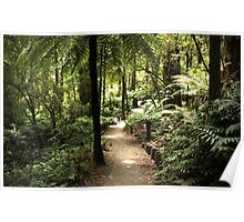Walk in the Rain Forest Poster