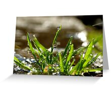 Grass Drops Greeting Card