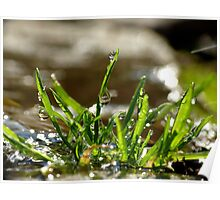 Grass Drops Poster
