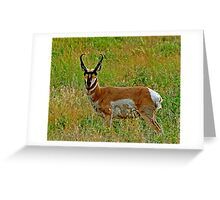 American Pronghorn Buck Greeting Card