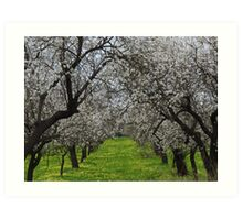 Blossom on the almond trees in Spain. Art Print