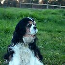 Rupert very noble in our paddock by BronReid