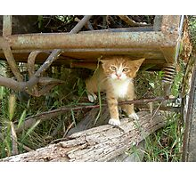 Romanian Country Cat Photographic Print